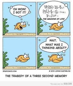 02325bfd0d415d68ed63fcc1932bd7fd-meaning-of-life-goldfish